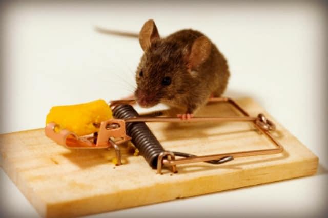 Attic Rodent Doctors The Attic Doctors